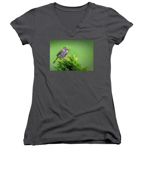 Song Sparrow Perched - Melospiza Melodia Women's V-Neck