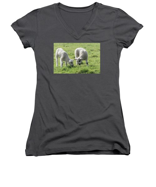Women's V-Neck T-Shirt (Junior Cut) featuring the photograph Spring Lambs by Scott Carruthers