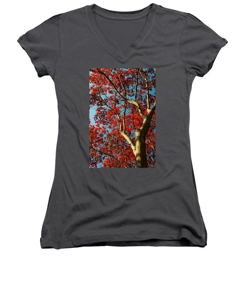 Women's V-Neck T-Shirt (Junior Cut) featuring the photograph Spring Maple by Dana Sohr