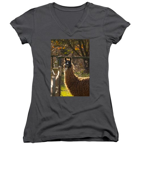 Staring Llama Women's V-Neck (Athletic Fit)