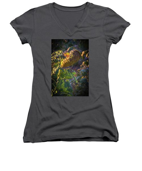 Sunflower Repose Women's V-Neck T-Shirt