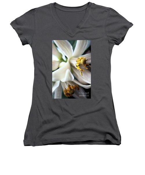 Sweet Fragrance 2 Women's V-Neck T-Shirt (Junior Cut) by Victor K
