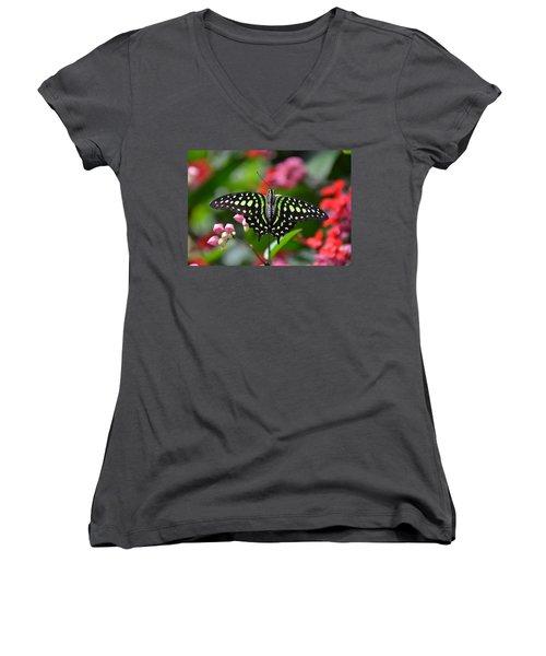 Tailed Jay4 Women's V-Neck T-Shirt (Junior Cut) by Ronda Ryan