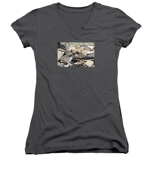 Women's V-Neck T-Shirt (Junior Cut) featuring the photograph Tern Chicks by David Grant