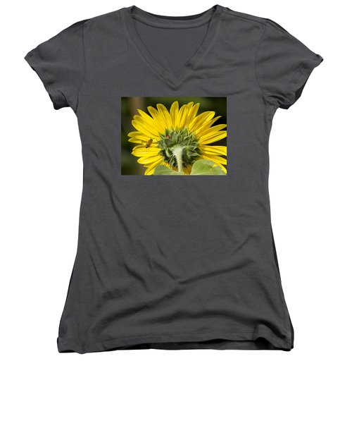 The Bee Lady Bug And Sunflower Women's V-Neck