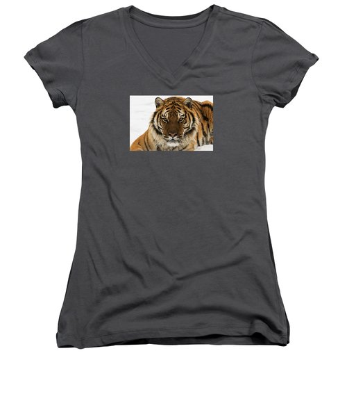 Tiger Stare Women's V-Neck (Athletic Fit)