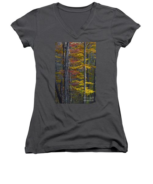 Trees With Autumn Colors 8260c Women's V-Neck