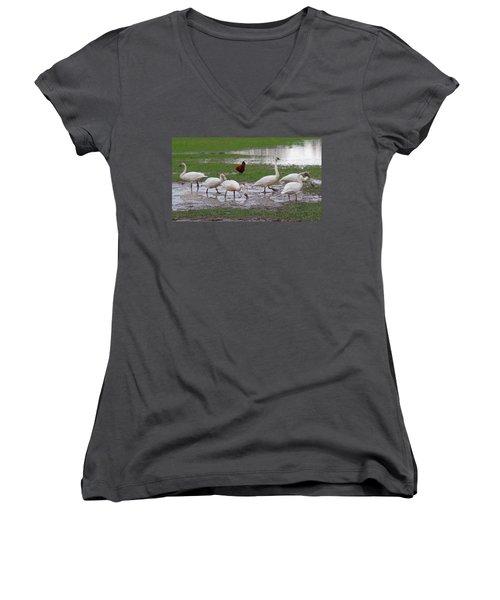 Trumpeter Swans And Rooster Women's V-Neck T-Shirt (Junior Cut) by Karen Molenaar Terrell