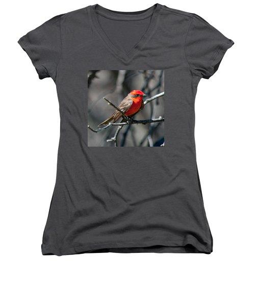 Women's V-Neck T-Shirt (Junior Cut) featuring the photograph Vermilion Flycatcher by Dan McManus