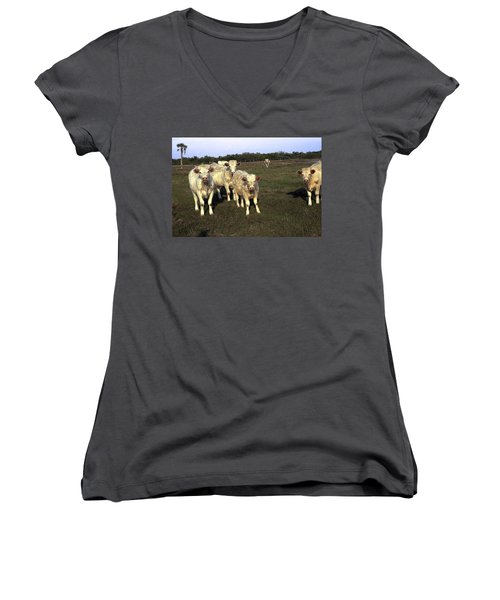 Women's V-Neck T-Shirt (Junior Cut) featuring the photograph White Cows by Sally Weigand