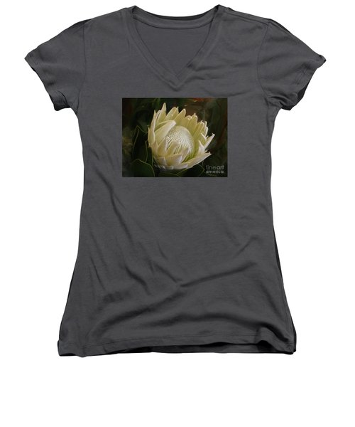 Women's V-Neck T-Shirt featuring the photograph White King Protea By Kaye Menner by Kaye Menner