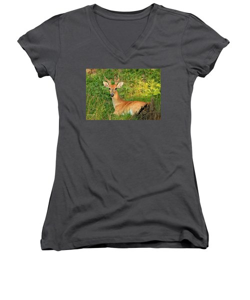 White-tail Buck Resting Women's V-Neck