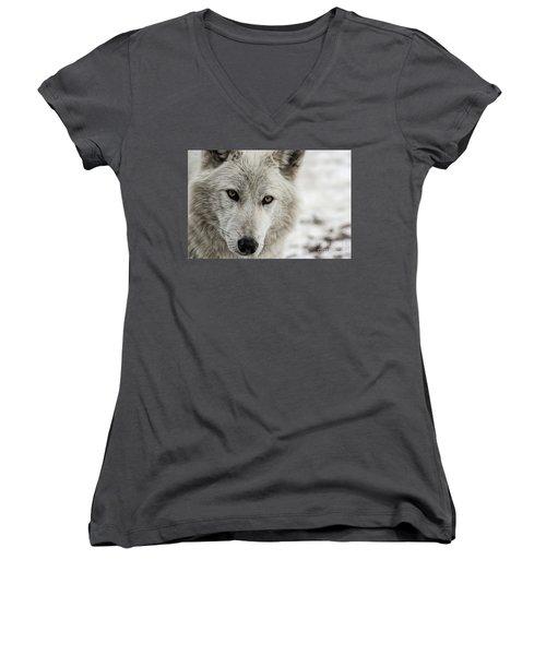 White Wolf II Women's V-Neck T-Shirt (Junior Cut) by Brad Allen Fine Art