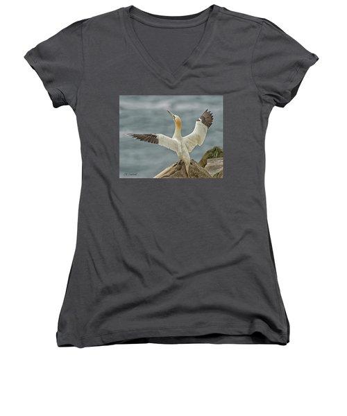Wing Flap Women's V-Neck T-Shirt (Junior Cut) by CR Courson