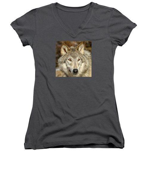 Wolf Portrait Women's V-Neck T-Shirt (Junior Cut) by Jack Bell