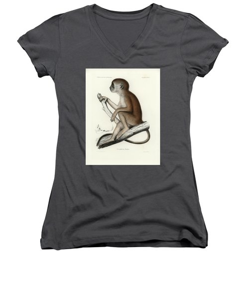 Yellow Baboon, Papio Cynocephalus Women's V-Neck T-Shirt (Junior Cut) by J D L Franz Wagner