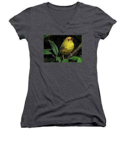 Yellow Bird Women's V-Neck
