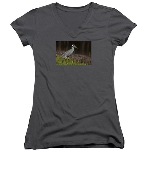 Yellow-crowned Night Heron Women's V-Neck
