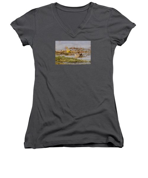 Yellow Crowned Wagtail Juvenile Bath Time Women's V-Neck T-Shirt (Junior Cut) by Jivko Nakev