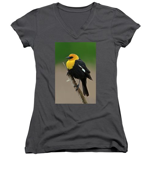 Yellow Headed Blackbird Women's V-Neck (Athletic Fit)