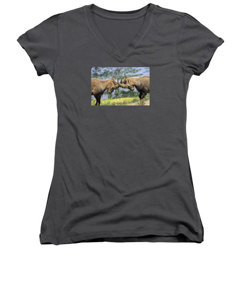 Young Male Wild Alpine, Capra Ibex, Or Steinbock Women's V-Neck T-Shirt (Junior Cut) by Elenarts - Elena Duvernay photo