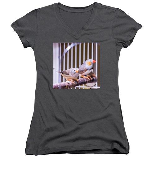 Zebra Finch Pair Women's V-Neck