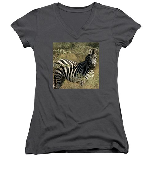 Zebra Portrait Women's V-Neck T-Shirt