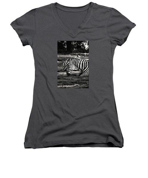 Zebras Women's V-Neck T-Shirt (Junior Cut) by Nikki McInnes