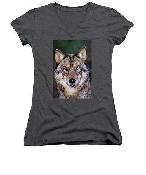 Gray Wolf Portrait Endangered Species Wildlife Rescue Women's V-Neck