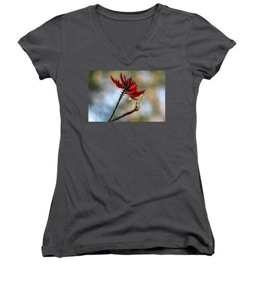 Coral Tree Flowers Women's V-Neck