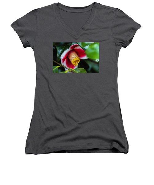 Camellia Bloom And Leaves Women's V-Neck