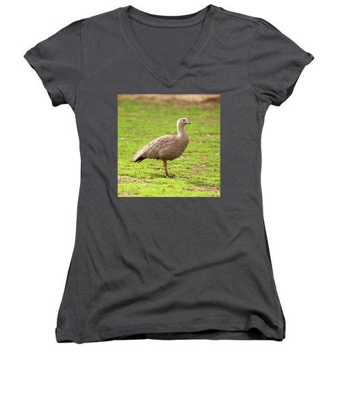 Cape Barron Goose Women's V-Neck