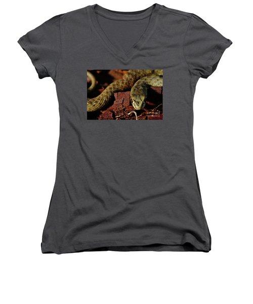 Wild Snake Malpolon Monspessulanus In A Tree Trunk Women's V-Neck