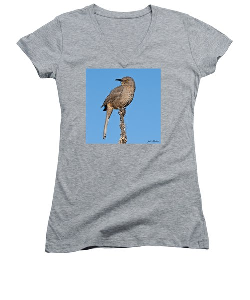 Curve-billed Thrasher Women's V-Neck T-Shirt (Junior Cut) by Jeff Goulden