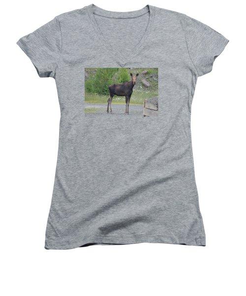 Moose Women's V-Neck T-Shirt (Junior Cut) by James Petersen