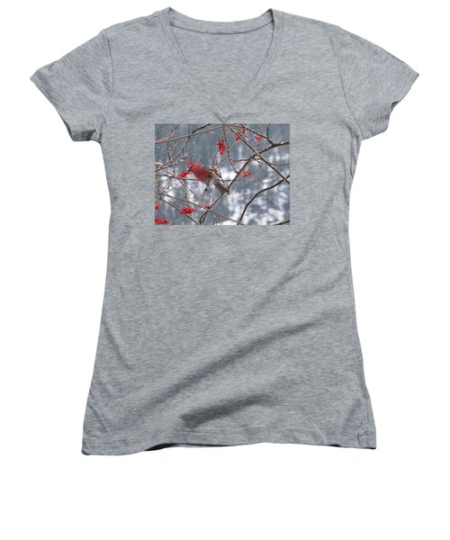 Pine Grosbeak And Mountain Ash Women's V-Neck T-Shirt (Junior Cut) by Leone Lund