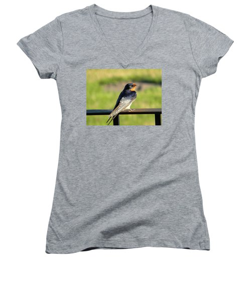 Barn Swallow Women's V-Neck (Athletic Fit)