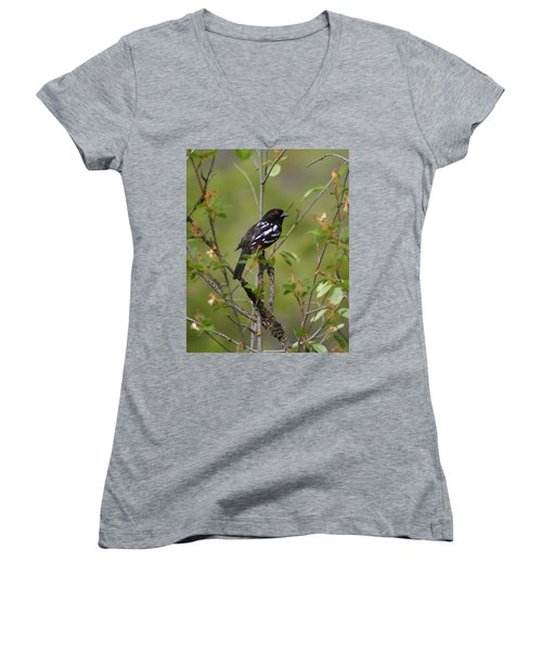 Spotted Towhee Women's V-Neck