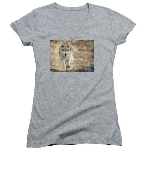 Women's V-Neck T-Shirt (Junior Cut) featuring the photograph Arctic Wolf by Wolves Only