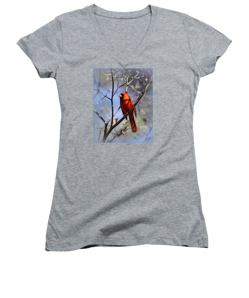 3477-006- Northern Cardinal Women's V-Neck (Athletic Fit)