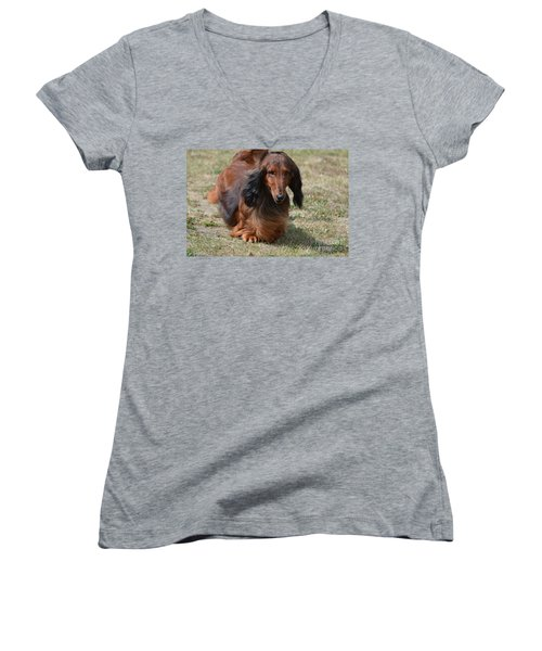 Adorable Long Haired Daschund Dog Women's V-Neck (Athletic Fit)