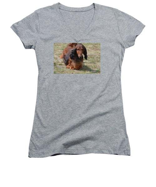 Adorable Long Haired Daschund Dog Women's V-Neck T-Shirt (Junior Cut) by DejaVu Designs