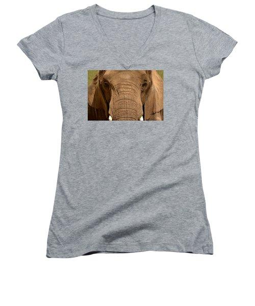 African Elephant Women's V-Neck