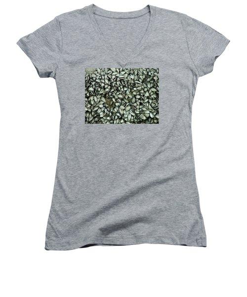 All The Shells Women's V-Neck T-Shirt