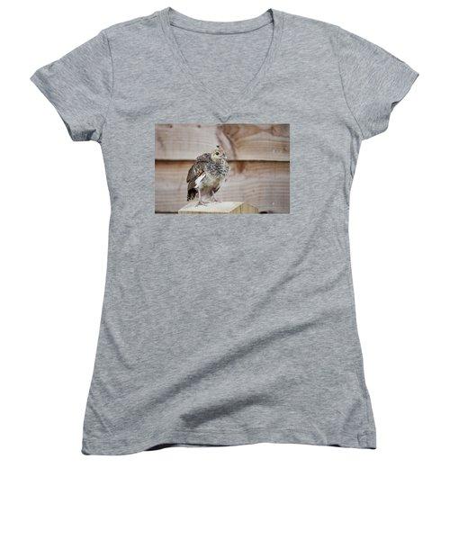 Baby Peacock Women's V-Neck T-Shirt