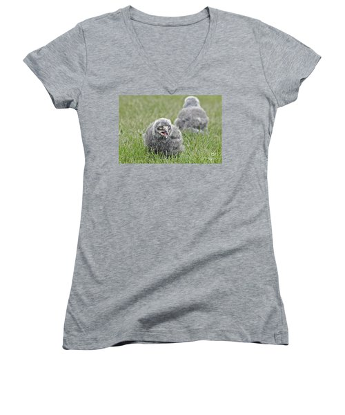 Baby Snowy Owls Women's V-Neck T-Shirt