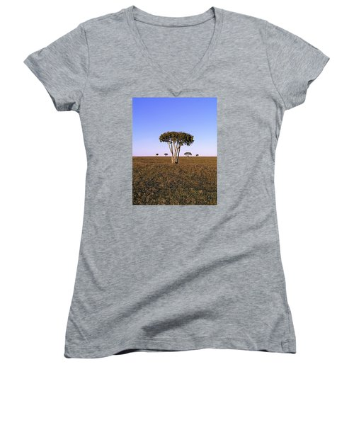 Barren Tree Women's V-Neck (Athletic Fit)