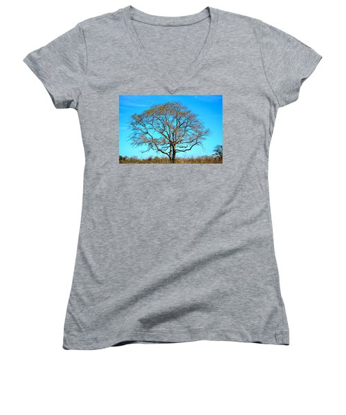 Women's V-Neck T-Shirt (Junior Cut) featuring the photograph Beautiful Branching by Debra Martz