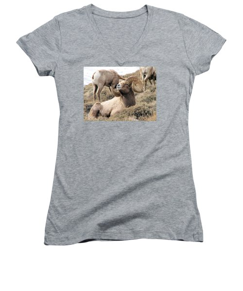 Big Bighorn Ram Women's V-Neck (Athletic Fit)