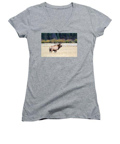 Big Colorado Bull Women's V-Neck